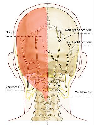 Si on peut le massage du service cervical au myome