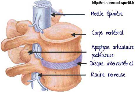 Discopathie: localisation du disque intervertébral Chiropratique Sillery