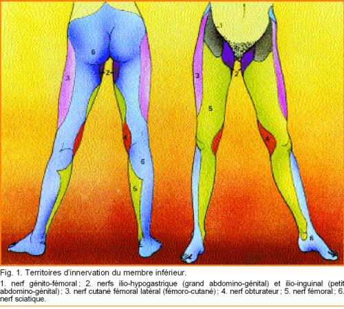 Les onguents de la dorsalgie dans le domaine des reins de la photo