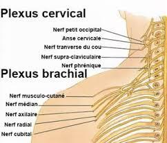 La douleur de la droite du cou à épaule