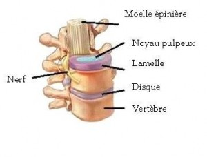 Lhomme rend la douleur à droit au côté au dos