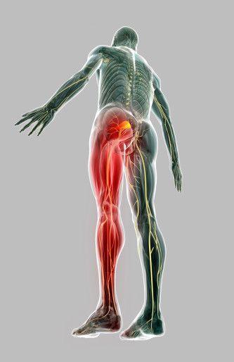 Douleurs aux jambes - Clinique Chiropratique Sillery / Chiro ...