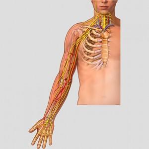 Plexus brachial-2