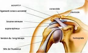 Bursite-épaule-1