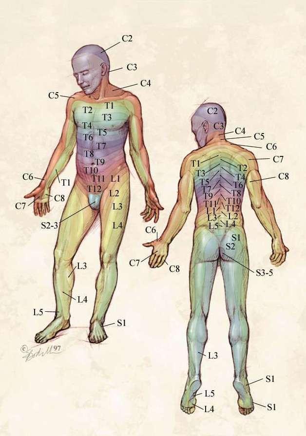 Paresthésie (engourdissement): symptômes, causes, diagnostic ...